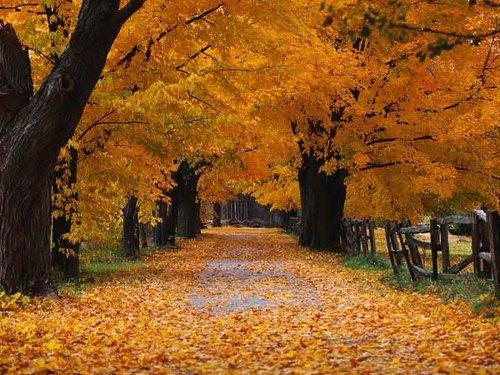 Autumn-halloween-65361_500_375